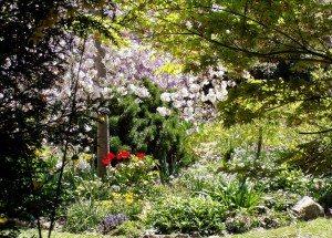 Little Hartley Garden